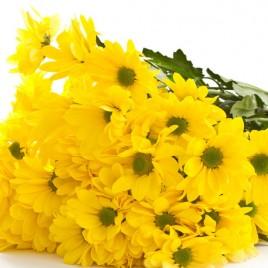 Желтая 2