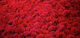 4. ПРЕМИУМ букеты цветов