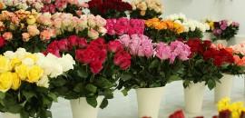 8. Срезные цветы