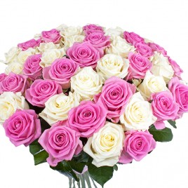 Baltas un rozā